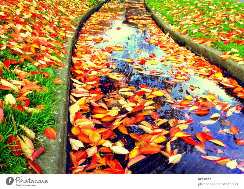 leaf flow Leaf Brook Autumn Grass Autumn leaves Colour River Sewer Water Float in the water