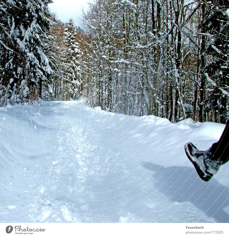 fresh snow Winter Snow Hiking Legs Feet Nature Landscape Weather Beautiful weather Ice Frost Tree Forest Lanes & trails Footwear Hiking boots Cold White Flake