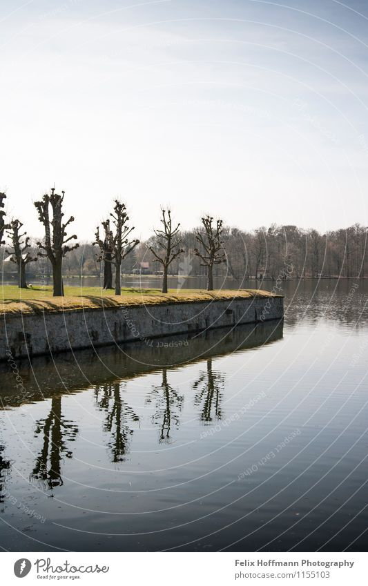 A row of trees on the shore Architecture Environment Nature Landscape Plant Air Water Sky Spring Tree Lakeside Pond Moritzburg Germany Europe Wall (barrier)