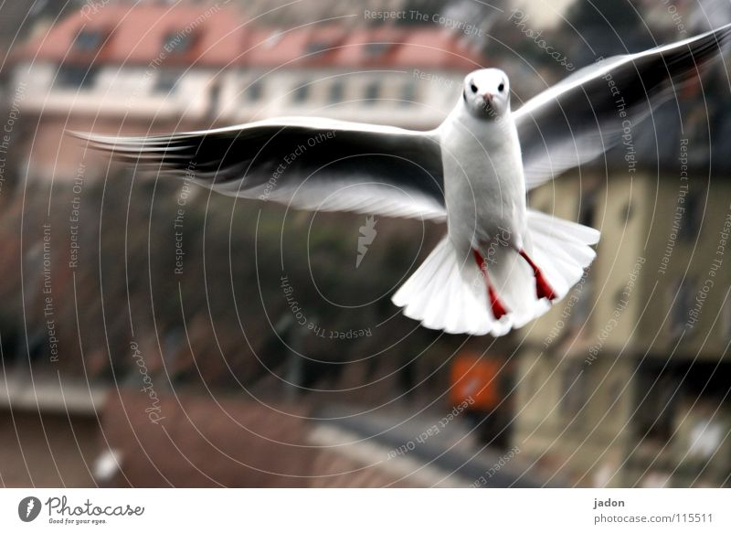 City Animal Cold Air Bird Flying Aviation Stand Wing Seagull Frustration Attack Attack