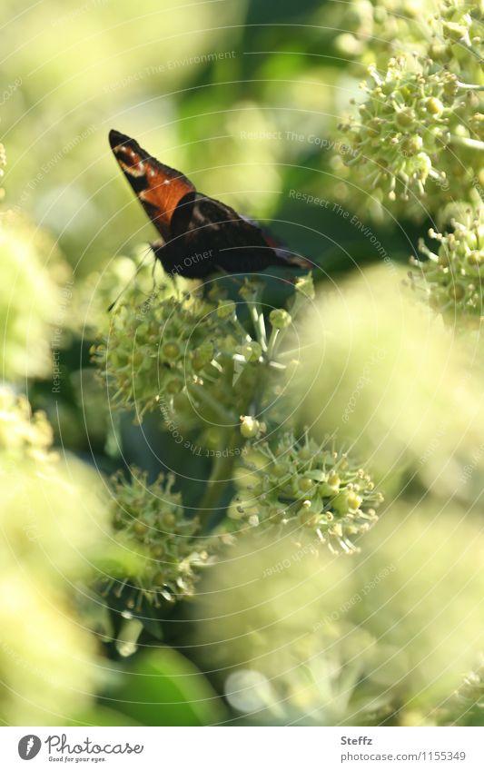 Nature Plant Green Summer Garden Idyll Wing Butterfly Ease Summery Bright green Summer feeling Garden plants