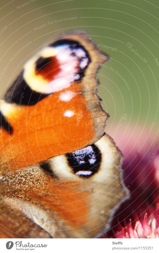 Nature Beautiful Summer Colour Design Orange Esthetic Wing Butterfly Inspiration Browns Noble butterfly