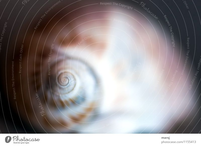 Spiral from the snail shell to the point Snail shell Meditation Harmonious Hypnotizing Simple natural Rotated Minimalistic Natural color Nature Life Calm Senses