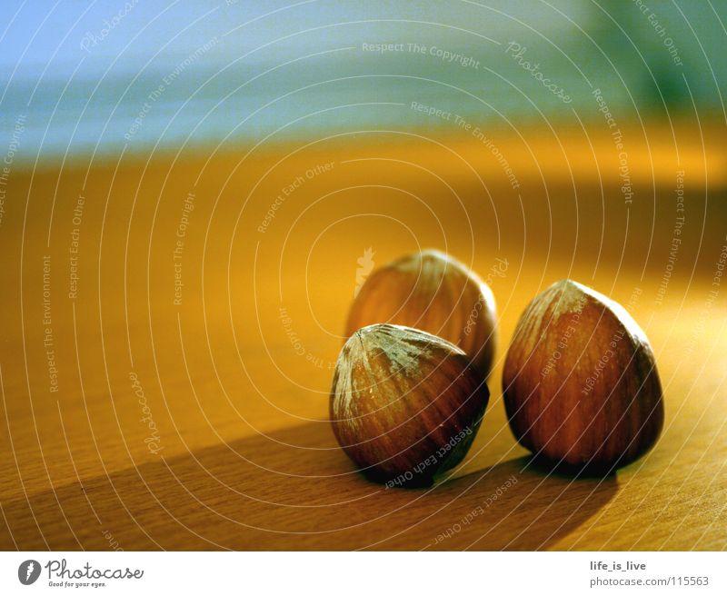 Nutrition Brown To enjoy Nut Hazelnut