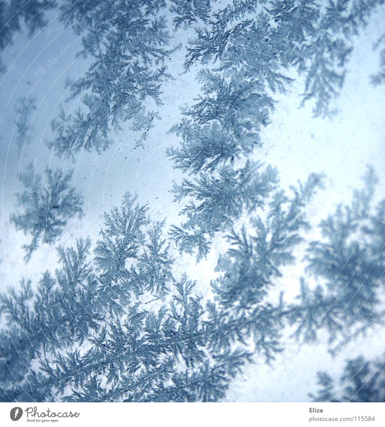 Blue Winter Cold Snow Window Ice Lighting Glittering Gloomy Frost Clarity Frozen Seasons Window pane Ice crystal Glimmer