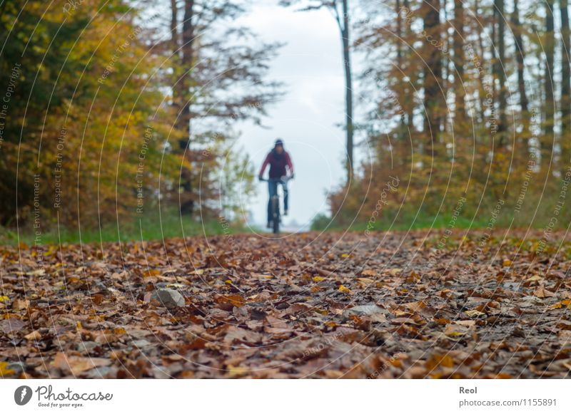 autumn tour Sports Cycling Mountain bike Autumn Leaf Forest Lanes & trails Footpath Cycling tour Bicycle Brown Athletic Clouds Autumnal Colour photo