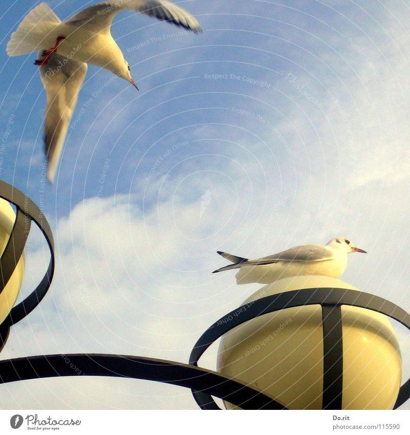 Mafied gets a visit Seagull Autumn Lamp Clouds Black White Beak Ocean Coast Beach Communicate Bird Sky Flying Sit Blue Baltic Sea