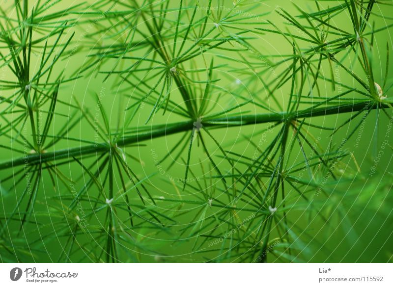 coniferous forest Green Plant Nature Macro (Extreme close-up) Easy Fresh Delicate Branchage Twigs and branches Soft Fine Peace Smooth Fir tree