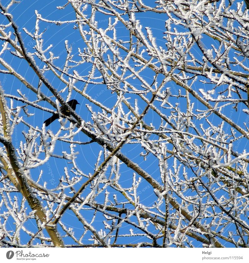 Beautiful Sky White Tree Blue Winter Black Loneliness Cold Snow Above Ice Brown Together Bird Tall