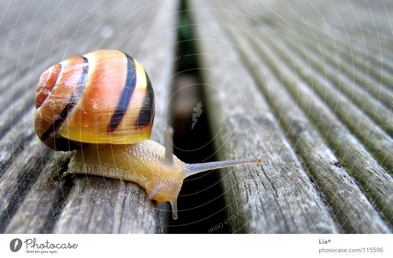 Animal Garden Small Break Brave Border Cute Balcony Barrier Snail Feeler Crawl Slowly Task Gutter Joist