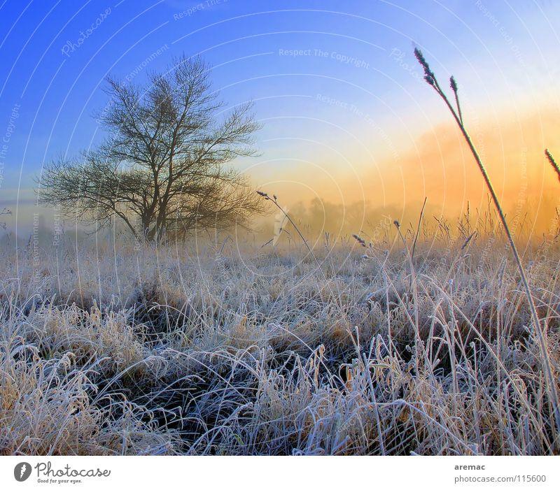 Tree Winter Meadow Grass Landscape Field Fog Rope