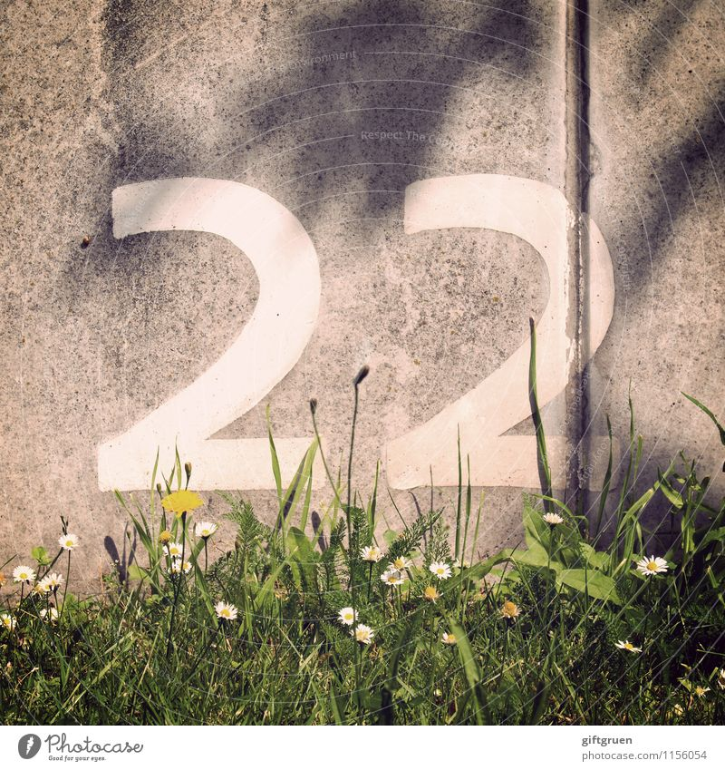 titanium Spring Summer Plant Flower Grass Blossom Arrangement Sequence 22 18 - 30 years Digits and numbers Characters Signs and labeling Column Wall (barrier)