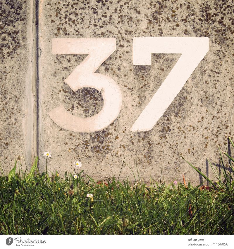 rubidium Meadow Write 37 thirty-seven Jubilee Digits and numbers Arrangement Concrete Furrow Daisy Flower Grass Sequence Lettering Signs and labeling