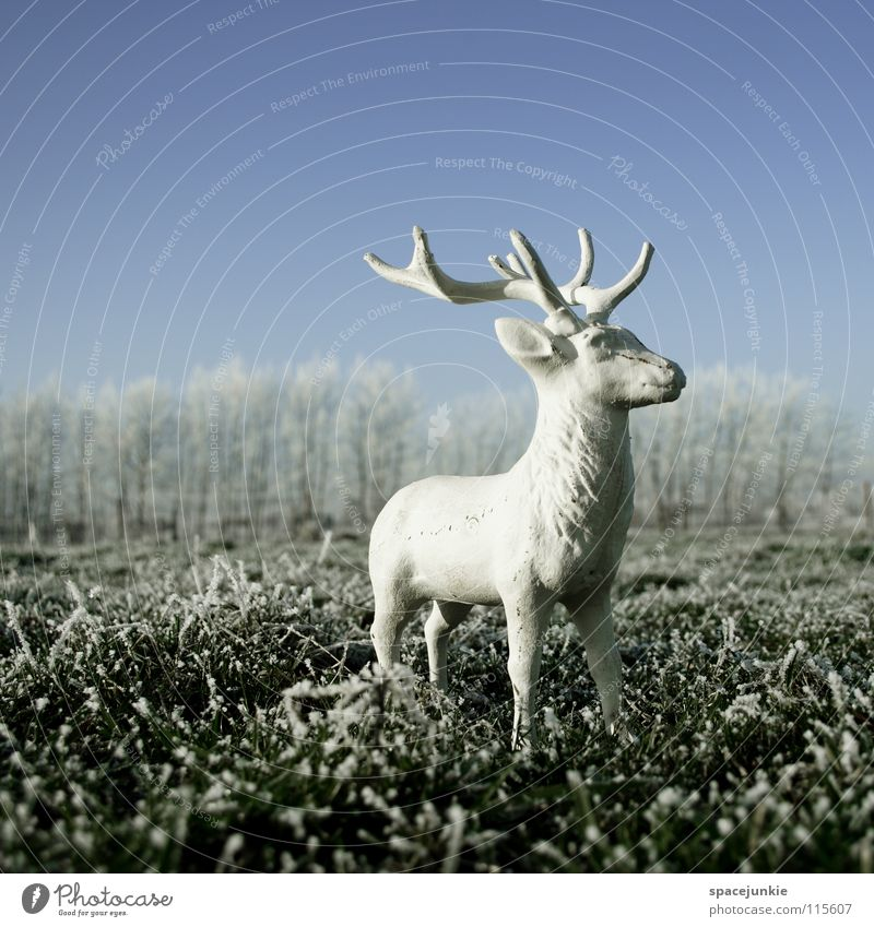 Nature Christmas & Advent White Joy Winter Cold Snow Meadow Grass Frost Statue Wild animal Frozen Freeze Deer Hoar frost