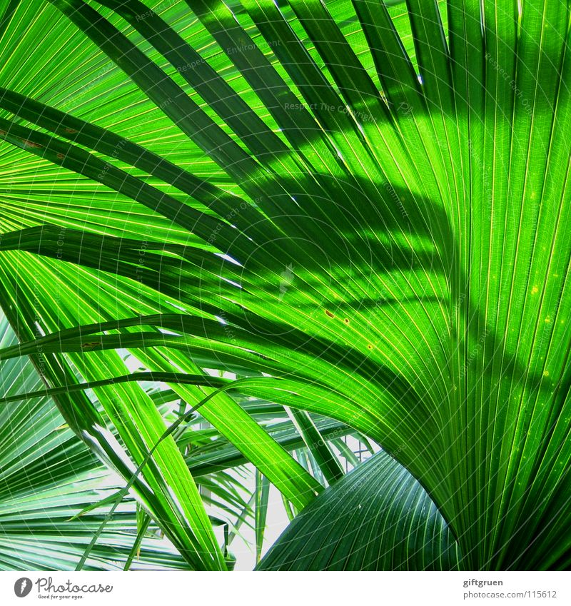 Greener you can't get! Palm tree Bilious green Plant Botany Pattern Colour Summer Shadow Nature Structures and shapes