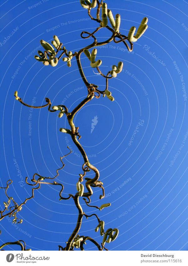 Sky Tree Blue Plant Winter Yellow Autumn Graffiti Bright Brown Clarity Branch Part Curve Tree trunk Beautiful weather