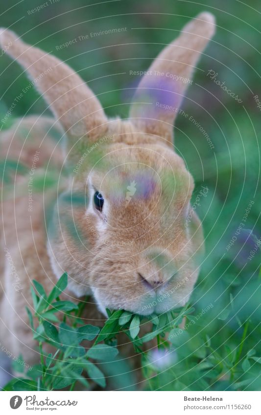 Carrots, no carrots? Muttu strike Vegetarian diet Life Animal Beautiful weather Animal face Hare & Rabbit & Bunny Observe To feed Esthetic Cool (slang) Blue