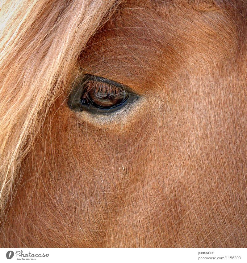 Animal Warmth Emotions Eyes Brown Wild Free Soft Sign Curiosity Infinity Horse Pelt Trust Brave Odor