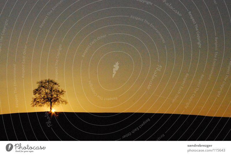 Nature Sky Tree Sun Calm Black Loneliness Yellow Autumn Time Night Sunset Branch Dusk Progress