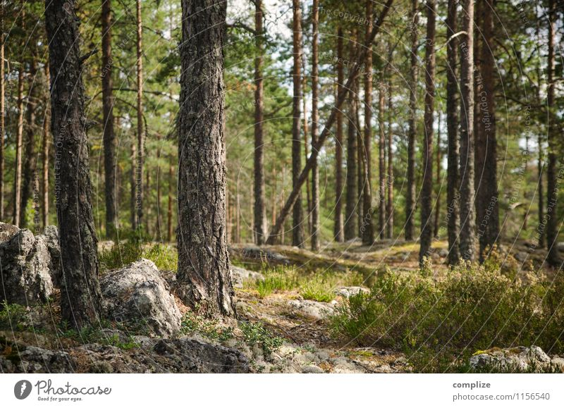 Finnish Forest Vacation & Travel Trip Adventure Far-off places Freedom Expedition Summer Summer vacation Environment Nature Landscape Climate Plant Tree Bushes