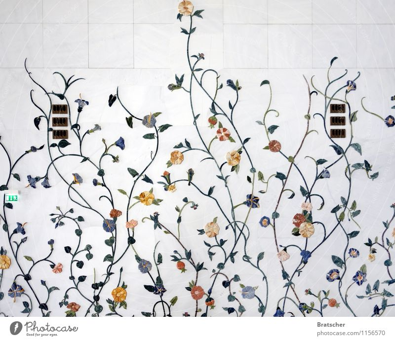 Spring leaves its white bath... Plant Flower Leaf Blossom Foliage plant Exotic Architecture Wall (barrier) Wall (building) Ornament Esthetic Glittering White