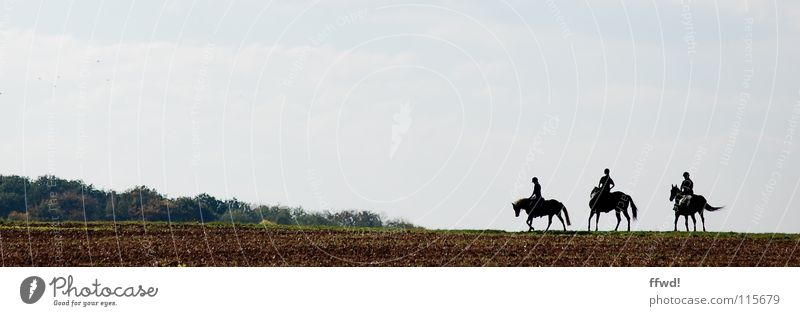 3 HP Field Silhouette Trip Short vacation Ride Horse Rider Leisure and hobbies Equestrian sports Gallop Walking In transit Vacation & Travel Nature Agriculture