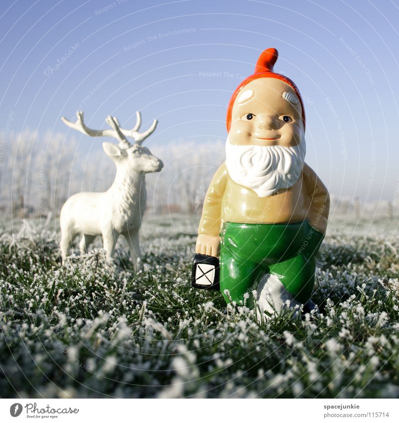 Looking for christmas (4) Meadow Grass Frozen Freeze White Hoar frost Exterior shot Winter December Cold Christmas & Advent Dwarf Garden gnome Whimsical
