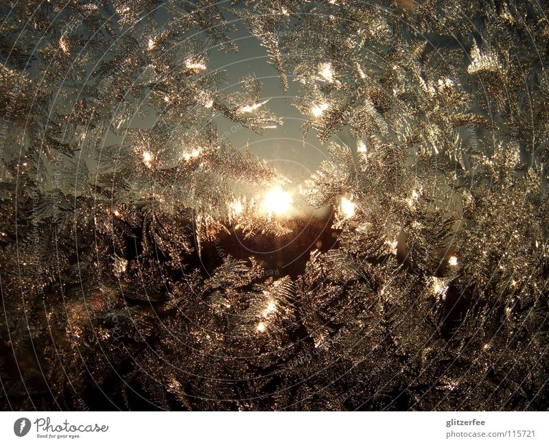 Sky Blue Sun Winter Cold Window Snow Ice Glittering Gold Frost Freeze Silver Window pane Crystal structure November
