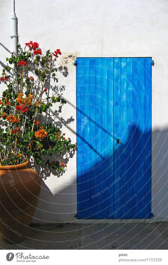 Vacation & Travel Blue Plant Summer White Sun Flower House (Residential Structure) Wall (building) Wood Wall (barrier) Stone Facade Living or residing Tourism