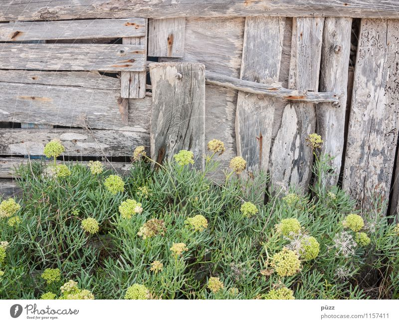 Nature Old Plant Green Flower Wall (building) Wood Wall (barrier) Gray Garden Brown Facade Bushes Transience Change Derelict
