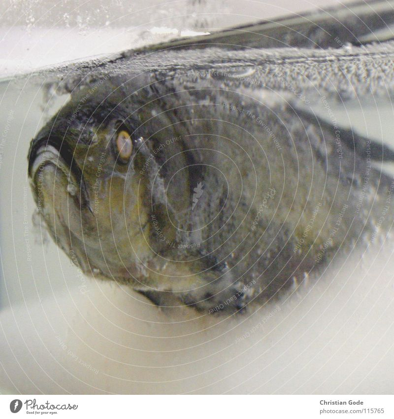 Water Winter Eyes Life Cold Nutrition Death Warmth Sadness Mouth Ice Time Swimming & Bathing Fish Grief Physics