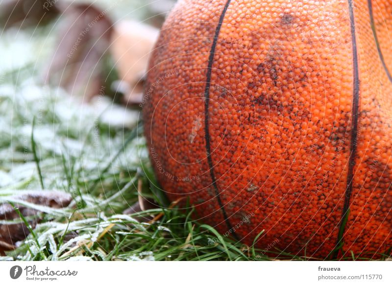 lonely ball Grass Forget Loneliness Winter Round Frozen Leaf Hoar frost Ice Broken Sports Playing Colour Ball Basketball Structures and shapes Sphere Line Frost