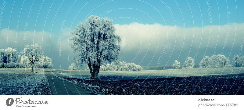 ...like snow! Winter Tree Hoar frost Clouds Seasons Field Beautiful Romance Landscape Street Lanes & trails Sky Idyll nice road Trip Blue