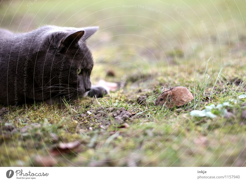 pitch and sulphur Animal Meadow Pet Wild animal Cat Mouse 2 Observe Looking Small Natural Cute Emotions Moody Self-confident Brave Together Watchfulness Serene