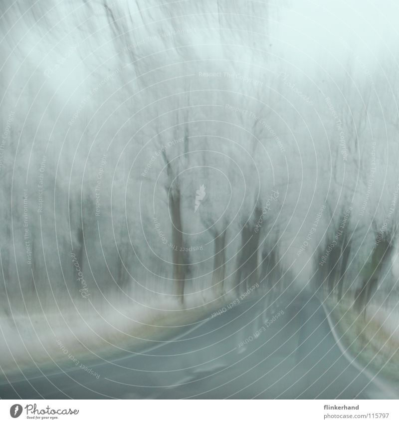 White Tree Joy Winter Dark Street Cold Snow Grass Freedom Bright Ice Germany Fear Flying Large