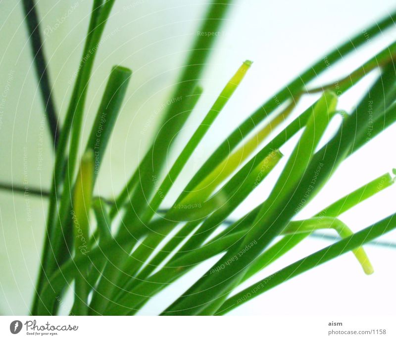 Green Nutrition Kitchen Things Vegetable Chives