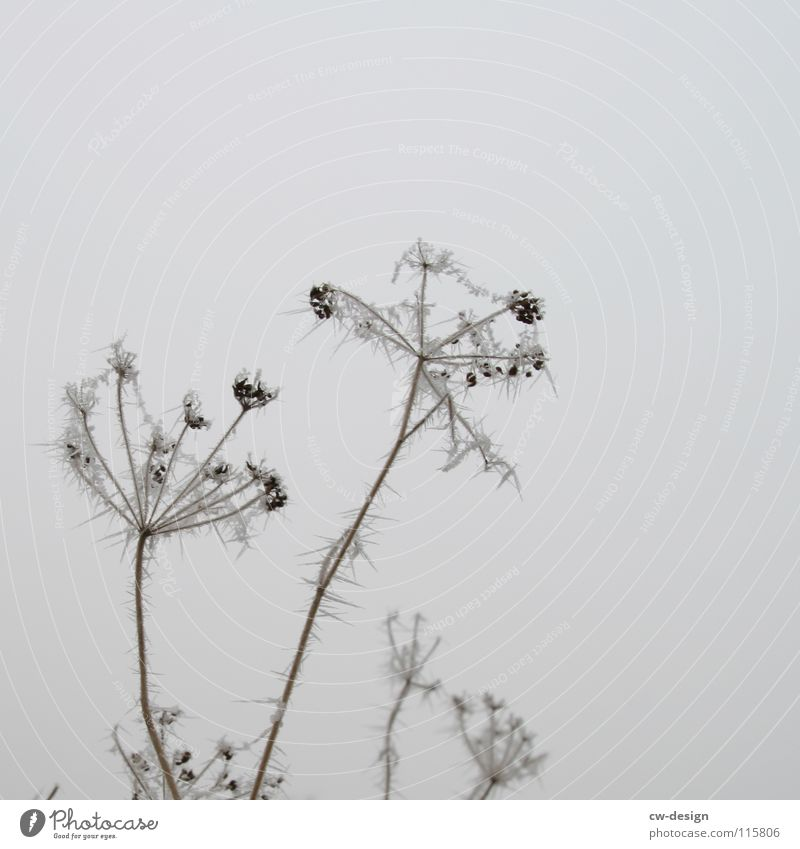 Nature Beautiful Sky White Plant Winter Clouds Loneliness Cold Snow Blossom Gray Landscape Air Ice Funny
