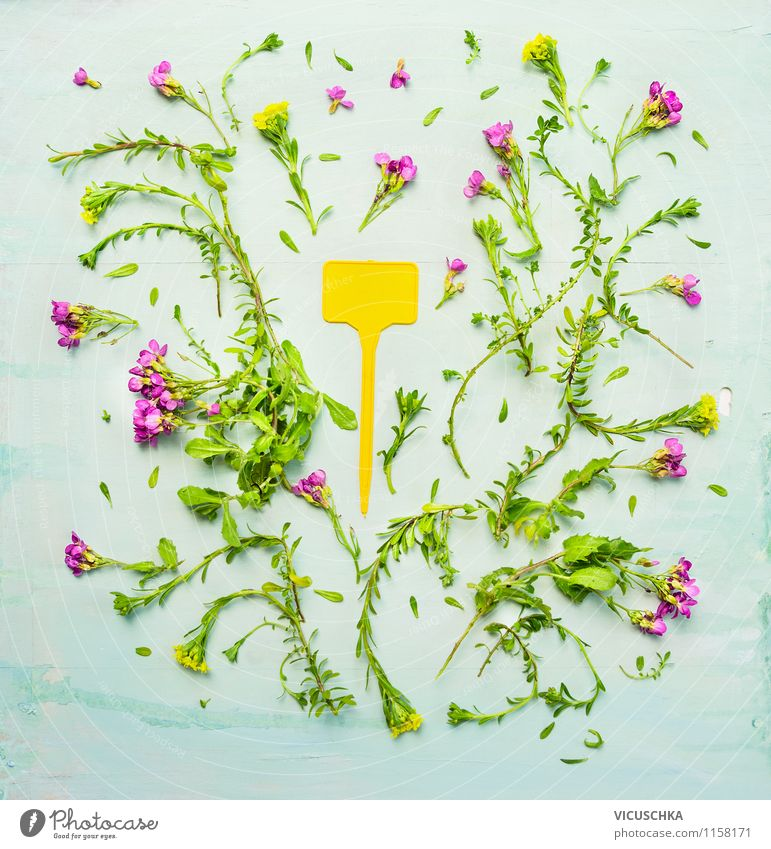 Nature Plant Green Summer Flower Yellow Style Background picture Garden Pink Design Signs and labeling Garden plot Scream Shield