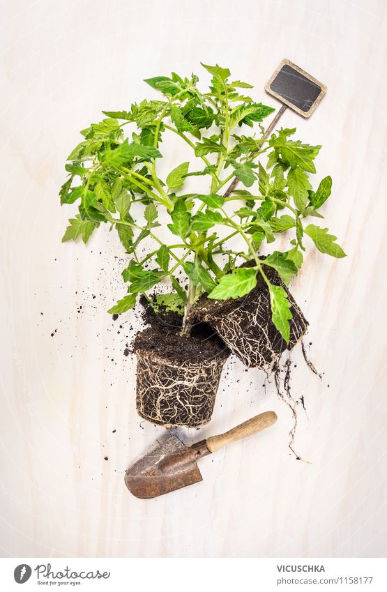 Nature Plant Summer Life Style Garden Design Earth Signs and labeling Vegetable Organic produce Organic farming Tomato Gardening Root Agricultural crop