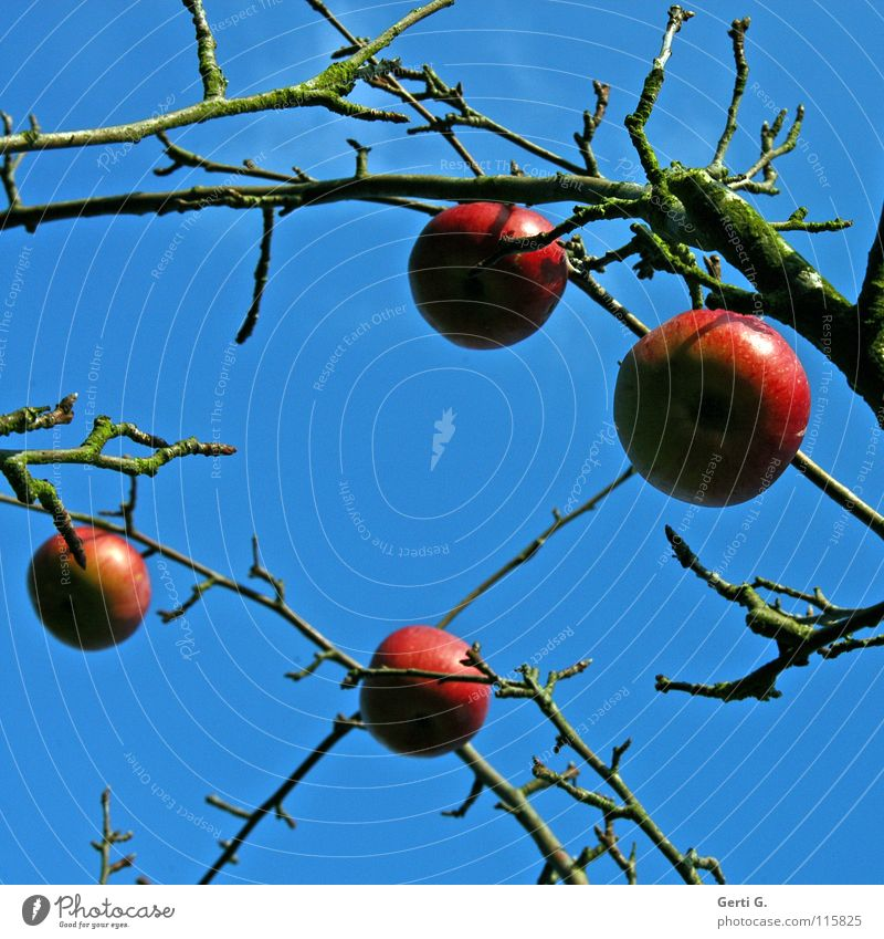 Sky Tree Red Clouds Nutrition Autumn Food Healthy Fruit Branch Apple Healthy Eating Living thing Twig Organic produce Ecological