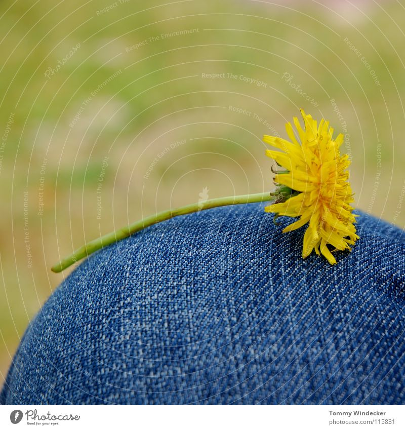 Nature Flower Green Blue Plant Yellow Relaxation Meadow Blossom Grass Spring Jeans Lawn Peace Lie Stalk