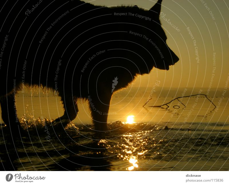 Water Sun Animal Dog Lake Wet Swimming & Bathing Drops of water Pelt Pet Section of image Partially visible Water reflection Watchdog Walk the dog Bright background