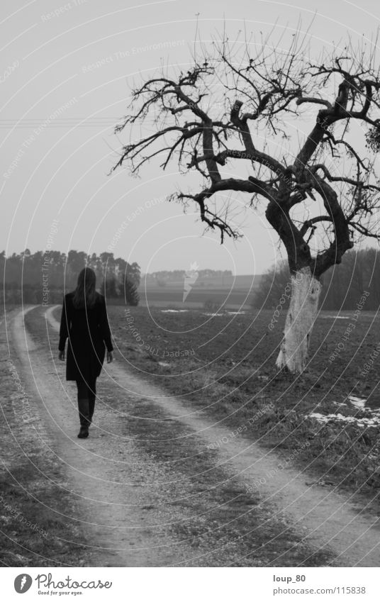 Human being Tree Winter Loneliness Lanes & trails To go for a walk Monochrome