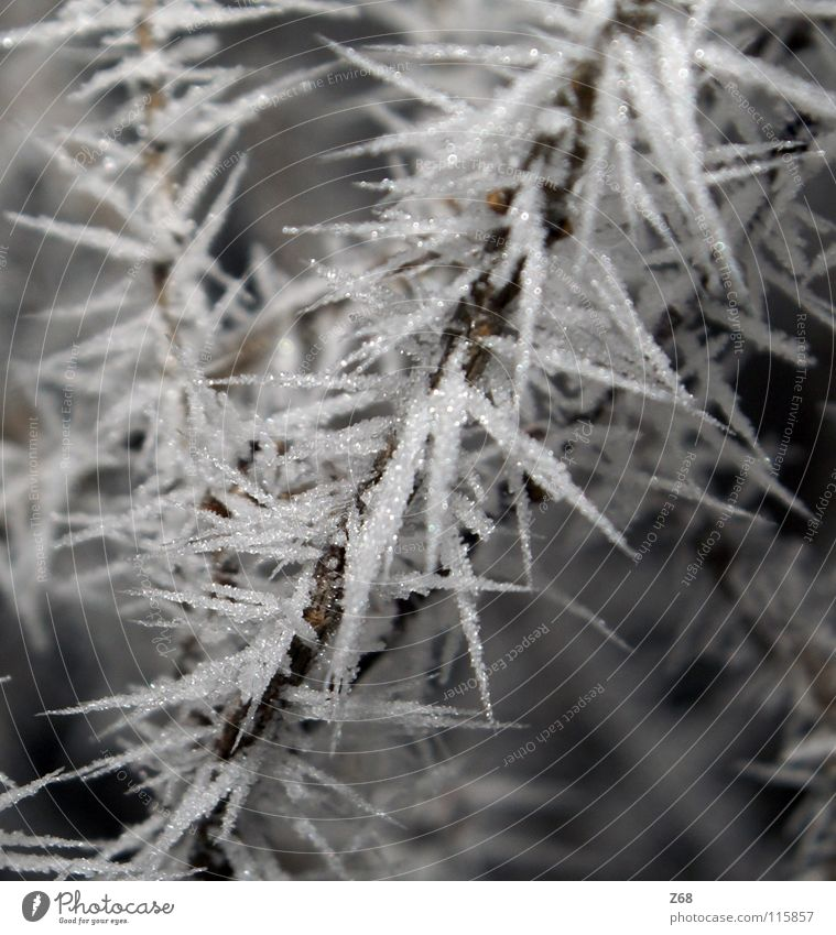 White Winter Calm Cold Snow Ice Branch Frozen Freeze Crystal structure Hoar frost Frostwork Freeze to death Ice wine