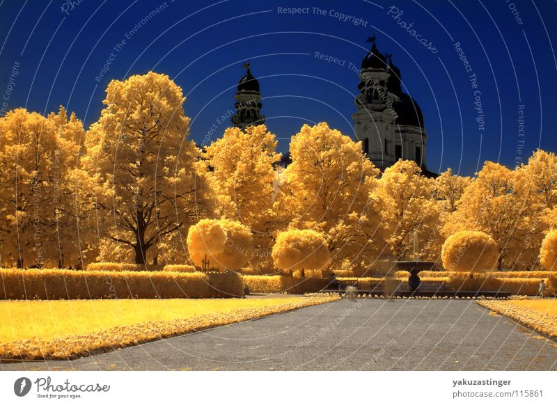 Sky Tree Flower Blue Leaf Yellow Colour Meadow Lanes & trails Religion and faith Horizon Well Infrared Infrared color