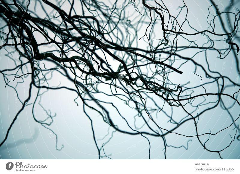 Tree Blue Black Dark Fear Growth Bushes Branch Catch Captured Depth of field Panic Eerie