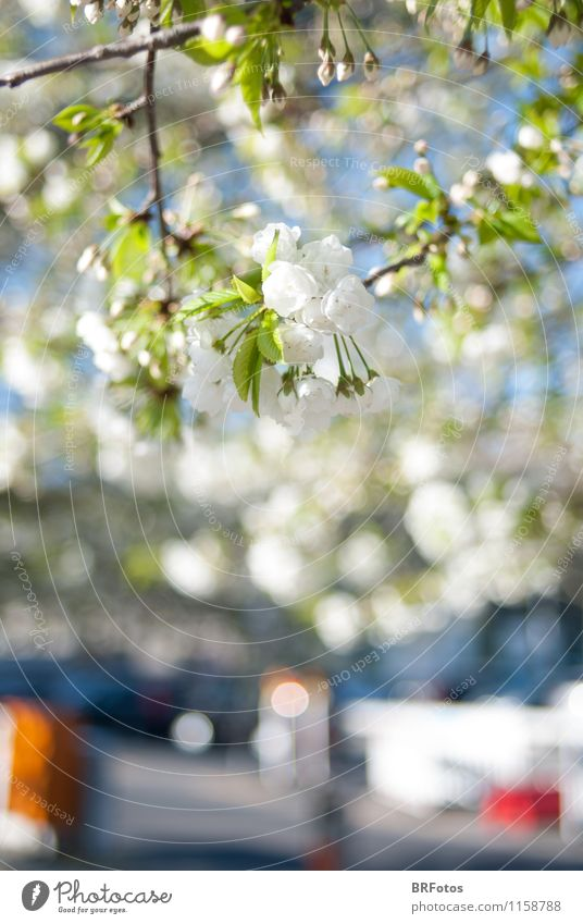 City Plant Green White Sun Tree Blossom Spring Moody Happiness Beautiful weather Spring fever