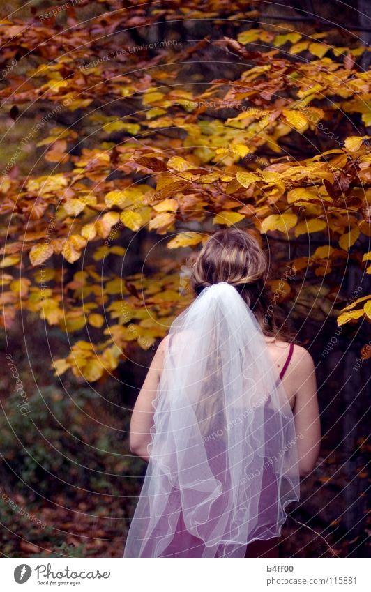 Autumn wedding?! Vail Red White Brown Yellow Leaf Forest Tree Delicate Caution Dress Faceless Foreign Grief Hope Woman Orange To fall Dyeing Branch Upward