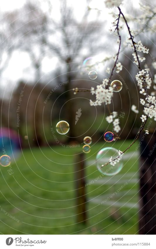 White Green Beautiful Tree Meadow Spring Blossom Delicate Fence Soap bubble Caution Bubble