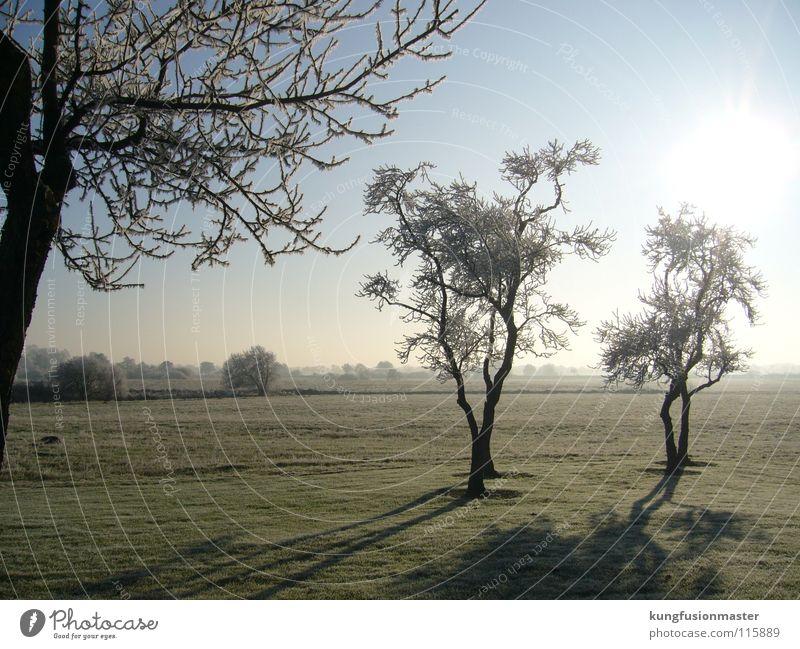 hoar frost Tree Hoar frost White Bad weather Express train Winter Ice Landscape Branch scenery Snow